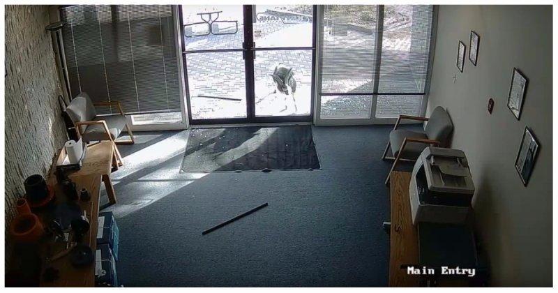 Рогатый вандал надругался над парадной дверью офиса