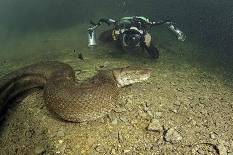 Он рискнул жизнью, чтобы заснять одно из самых опасных существ на планете…