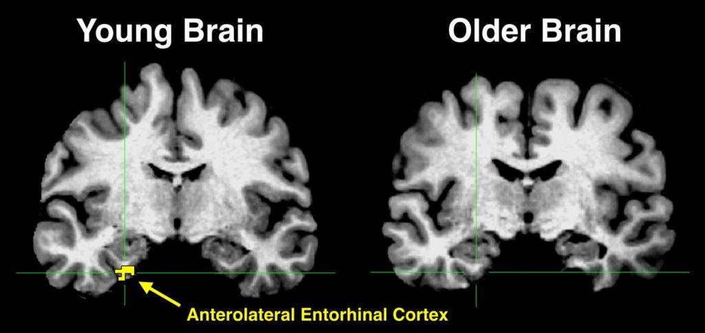 Картинка дня: чем старый моз…