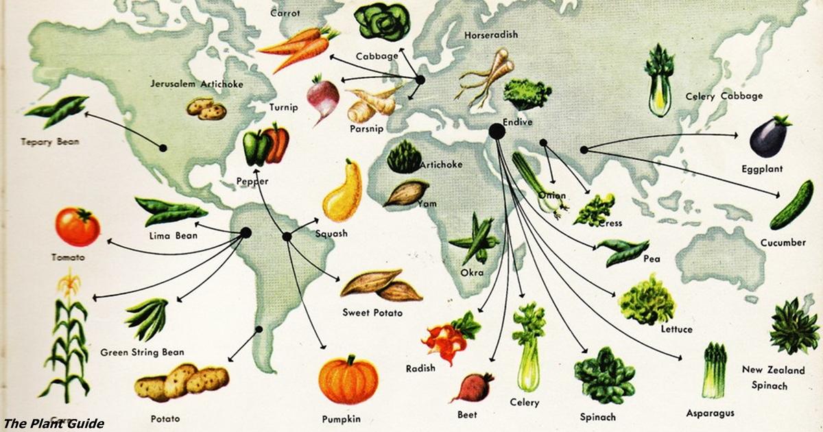 История овощей на вашем столе