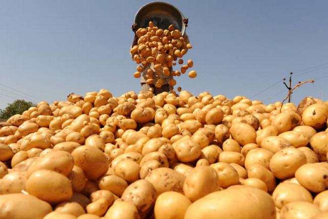 9 заповедей получения двух урожаев картофеля