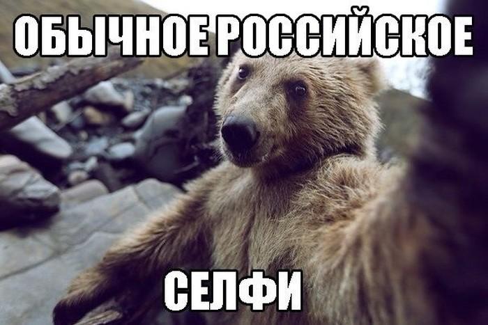 Весёлые комментарии, фото, картинки и прочее животные, картинки, комментарии, смешное, фото, юмор