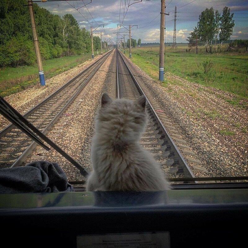 Усатые железнодорожники