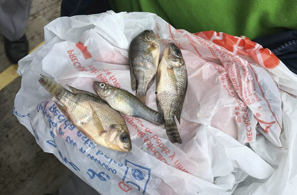 В Мексике выпал рыбный дождь