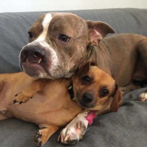 Эти собаки поддерживают друг друга и пытаются забыть то, что с ними произошло…