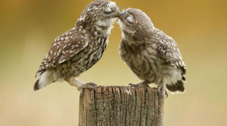 Они тоже влюбляются
