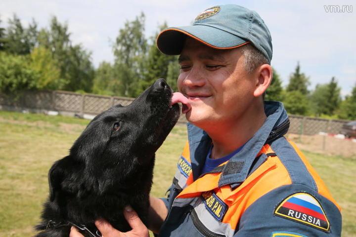 Человек спешит на помощь: шесть историй спасения собак