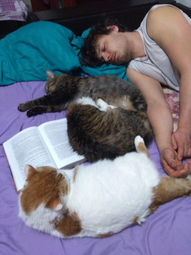 Думала, что 2 кота - это предел, но не тут-то было...