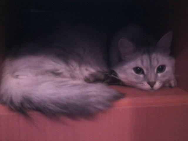 Не брезгуй особо. Когда заводишь себе кошку, мировосприятие резко изменяется… Есть у меня знакомый один, человек.