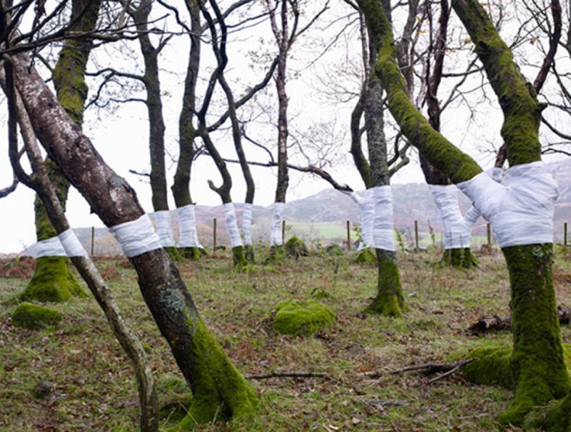 Всего несколько тряпок на деревьях и уже такой классный эффект на фото. перспектива, правильный ракурс, прикол, фотографии, юмор