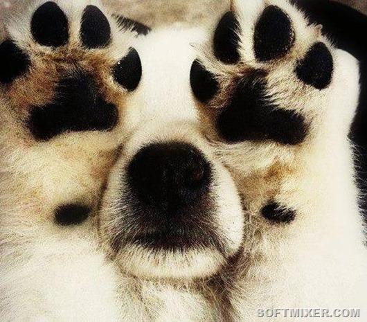 Собаки, думающие что хорошо спрятались…