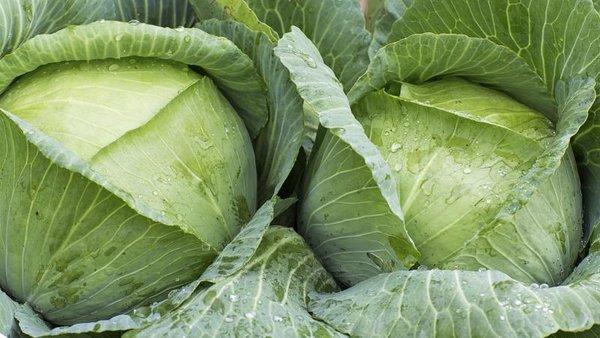 Июль — время подкормить капусту для крупных кочанов. 5 лучших вариантов