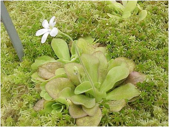 Растения хищники способные расти в нашем доме