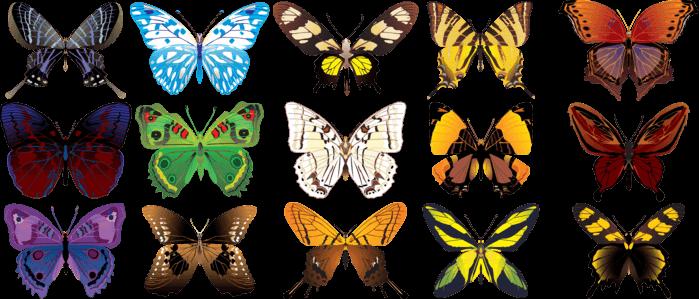 Бабочки и самые интересные факты о них