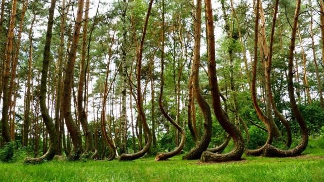 Леса с другой планеты!