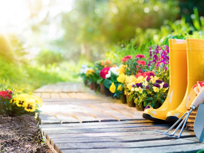 5 эффективных способов избавления от сорняков
