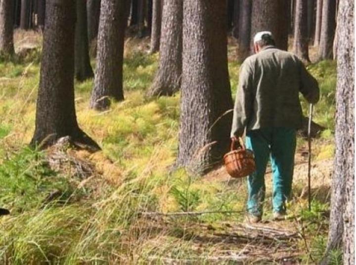 Если грибник - настоящий индеец, он не станет ломится по лесу в поисках грибов...