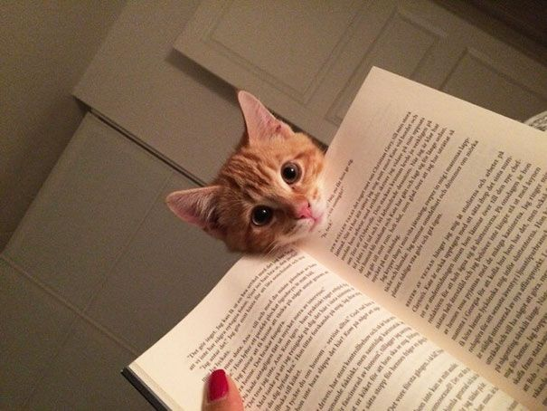 25 кошек, которые хотят, чтобы вы прекратили читать