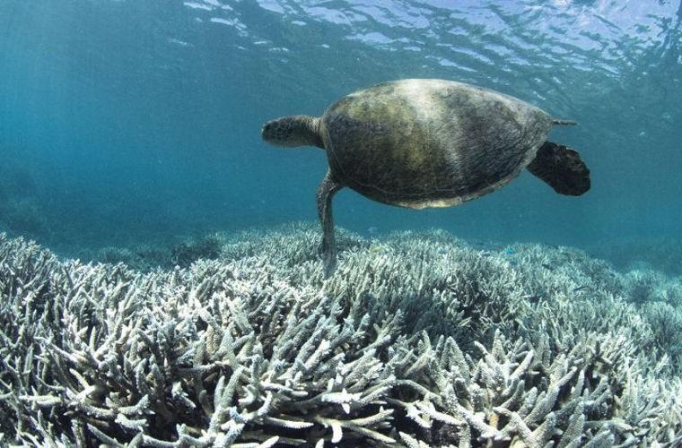 Ученые сообщили о неизлечимой болезни Большого Барьерного рифа