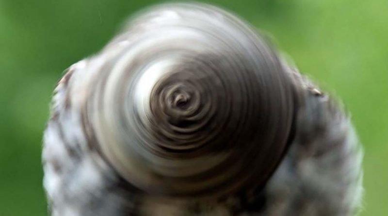 Фотографу удалось запечатлеть вращающуюся голову совы, которая отдалённо напоминает колесо