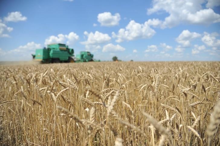 Волгоградская область. Итоги сельскохозяйственного года