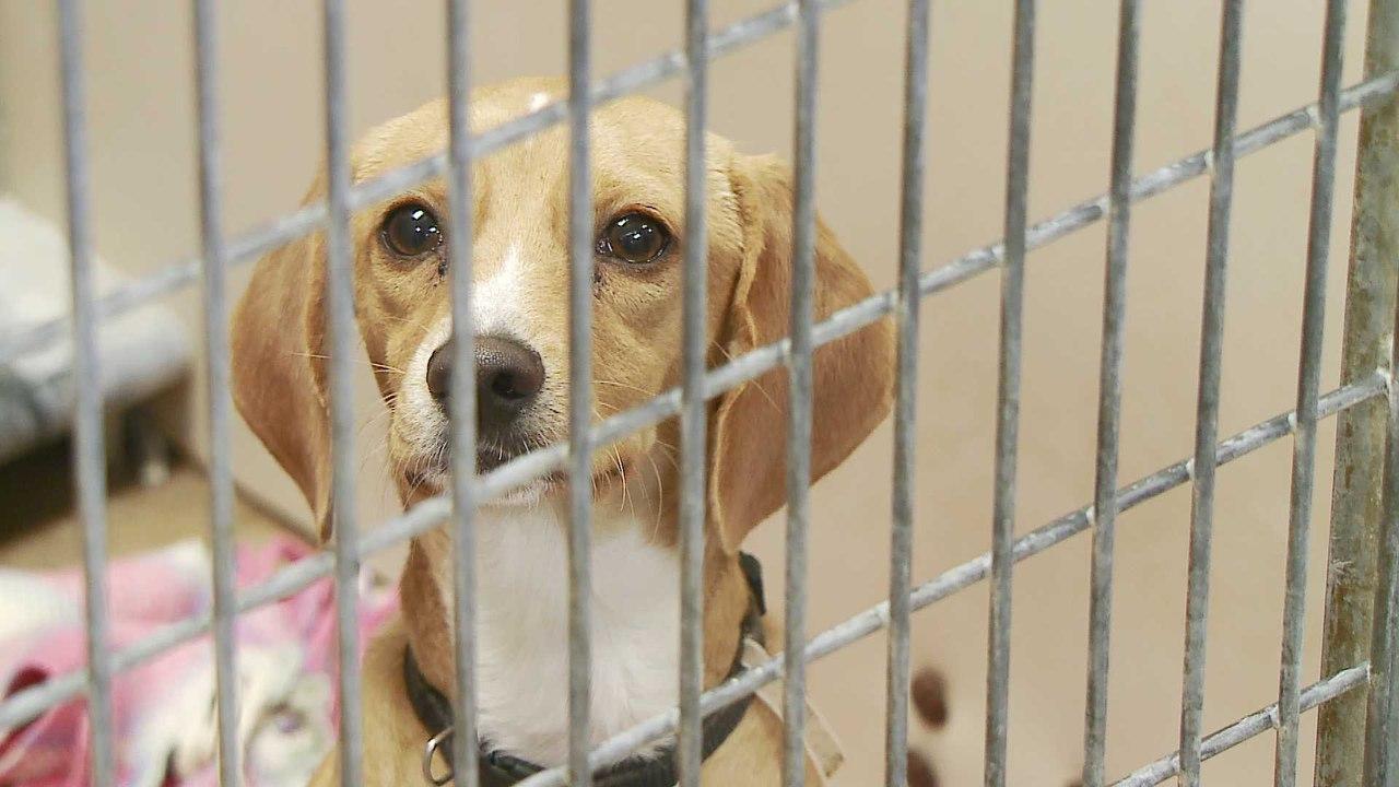Все медицинские школы США и Канады отказались от экспериментов на животных в обучающих целях