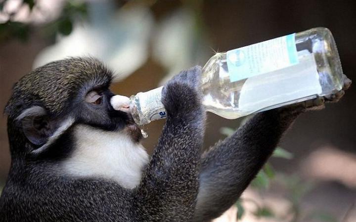 Ученые: алкоголь помог обезь…