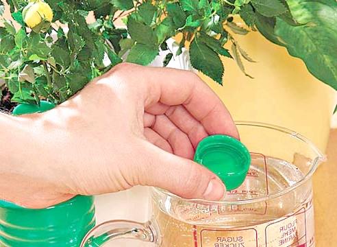 Нашатырный спирт в борьбе за урожай