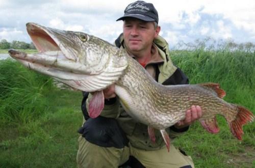 В Иркутской области запрещают ловить хариуса и щуку