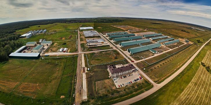 Крупный животноводческий комплекс открылся в Новосибирской области