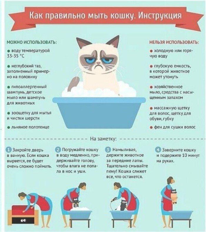 30 занимательных и очень полезных шпаргалок о домашних питомцах