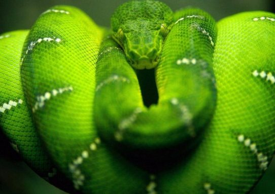Испытание змеей