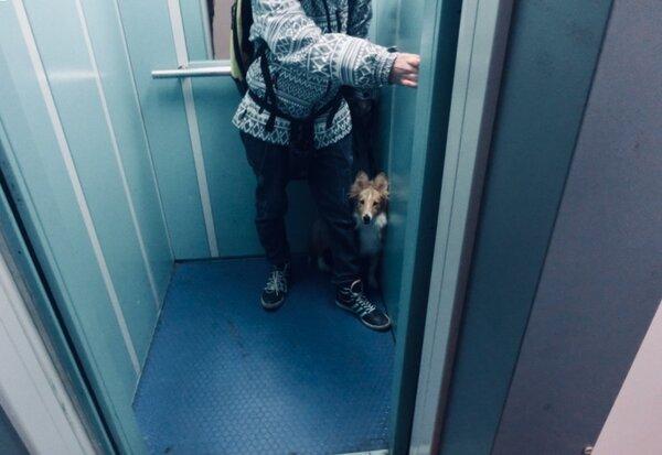 Собаки соседки гадили у нас в лифте, как мой муж её проучил