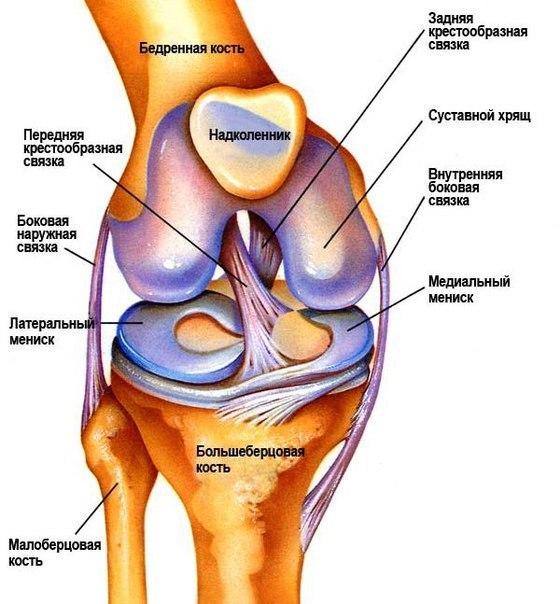 Полезная информация: травмы коленного сустава— народные методы лечения