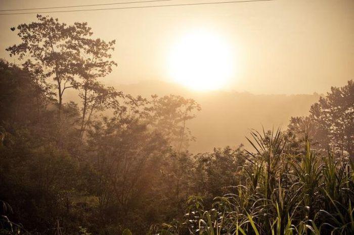 Деревня на деревьях - фото 31