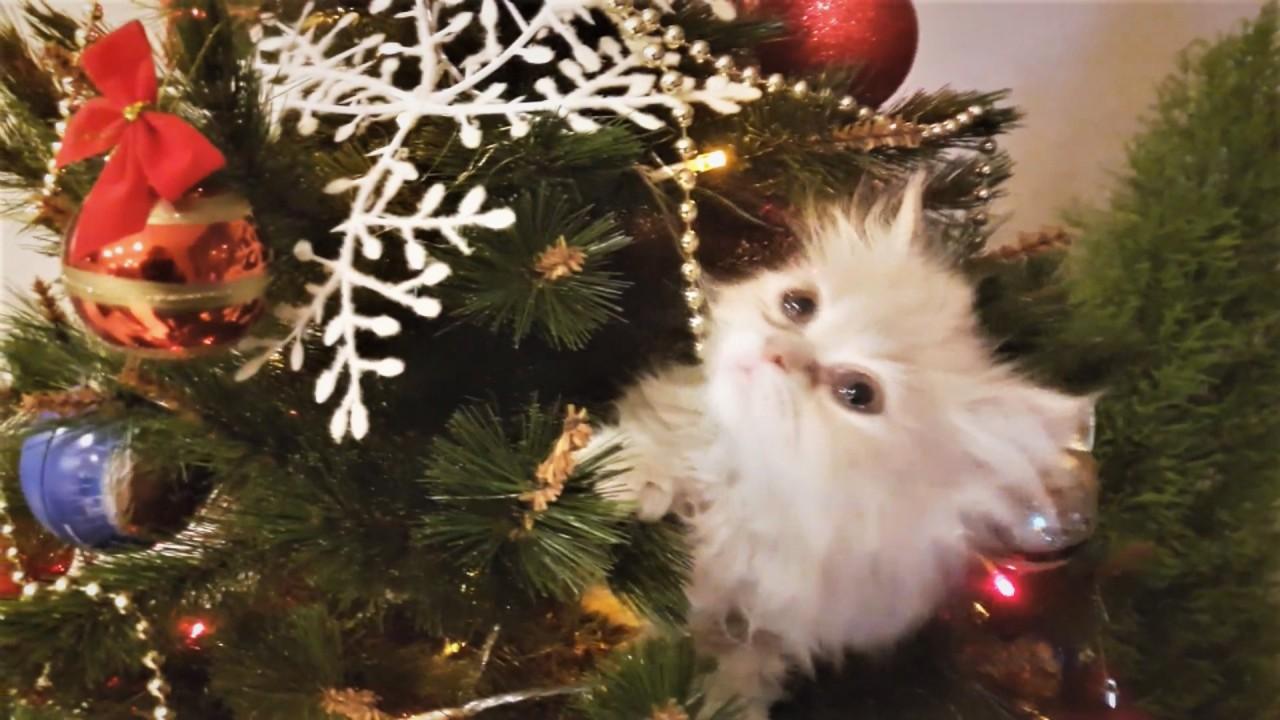 Новогодние видео приколы с животными