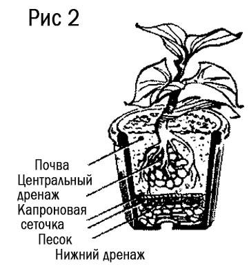 Дренаж в комнатном цветоводстве