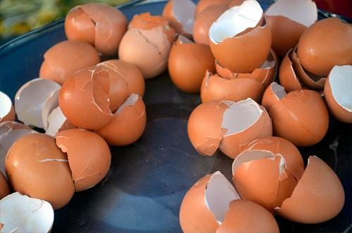 Удобрение из яичной скорлупы — для каких растений применять?
