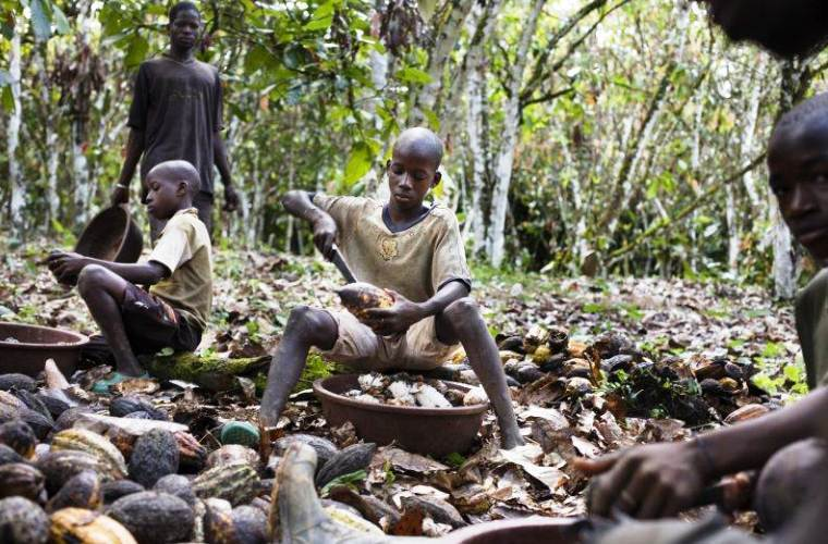 Кошмар в 21 веке: Компании США используют на плантациях детей рабов