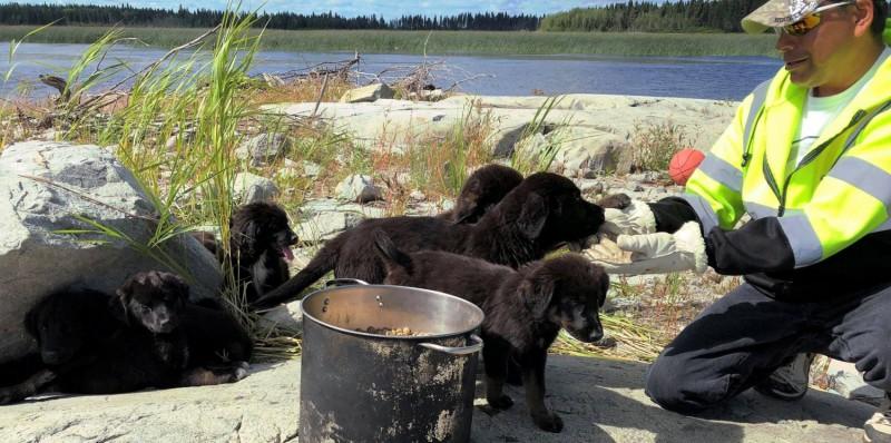 В Канаде с маленького необитаемого острова спасли семь щенков