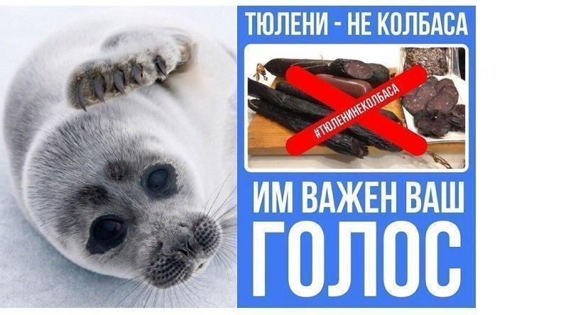 Тюлени – не колбаса: в Интер…