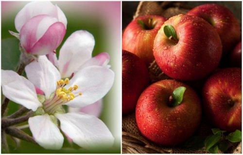 Фрукты и овощи в период цветения (15 фото)