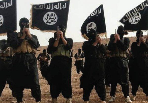 Сожрите друг друга: в Сирии продолжается резня между ИГИЛ и ХТШ