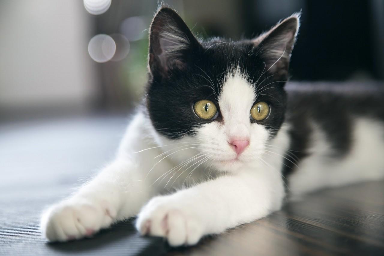 Картинки по запроÑу Звук кошки, мурлыканье кота