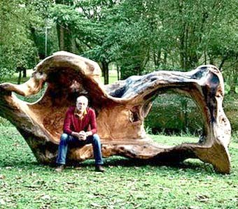 необычная скамейки из упавшего дерева