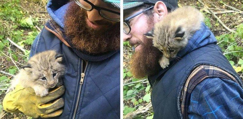 Канадец заметил котёнка в лесу, но что то  с ним было не так