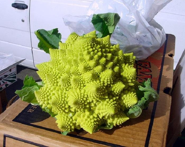 Овощ, выглядящий как пришелец, является близким родственником цветной капусты и брокколи, только его нежно-зеленые соцветия не округлой формы, а конусообразной и располагаются на кочане по спирали.