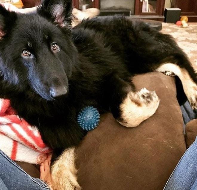 Узнав о диагнозе пса, хозяева отказались от питомца прямо в больнице. А ведь ему требовались операции…