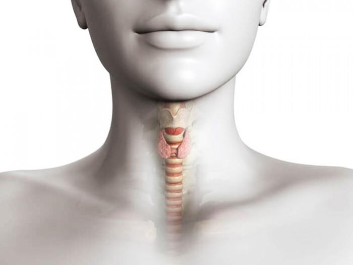 Признаки проблем с щитовидной железой