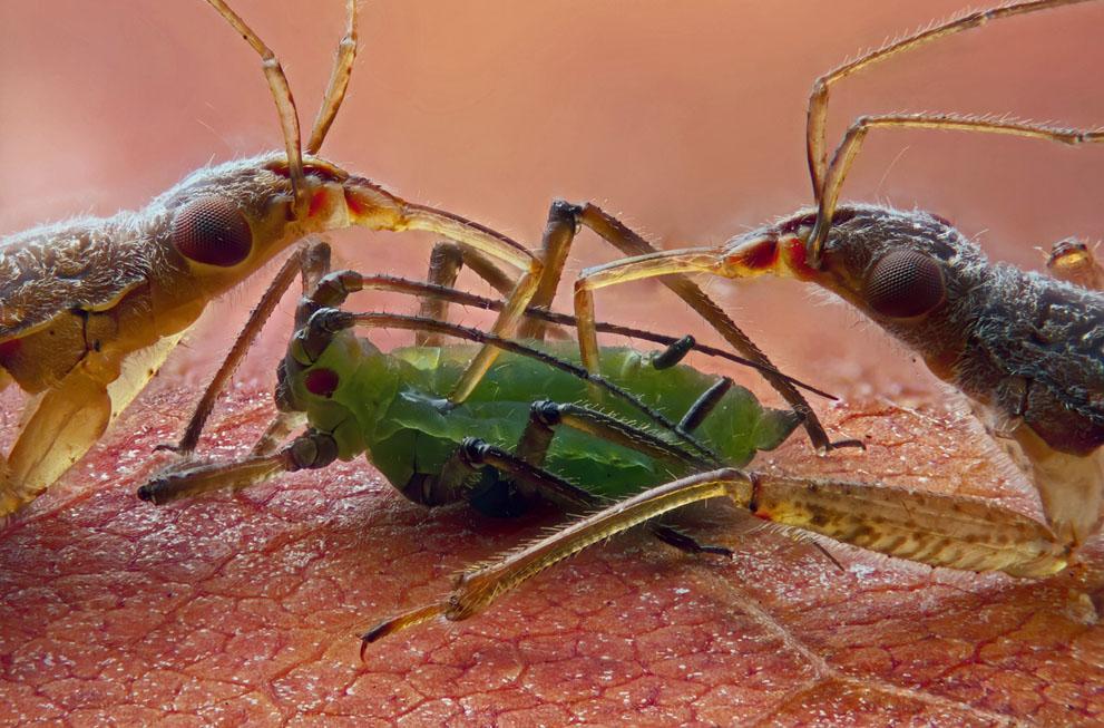 micro22 Под микроскопом